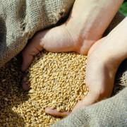 Grains 03_00414_2200x1600